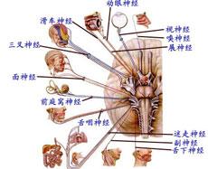 面神经麻痹的分型