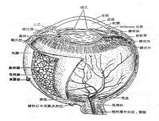 白内障超声乳化吸出术
